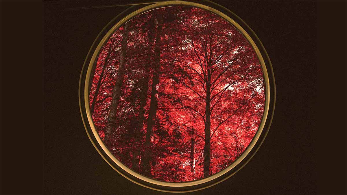 Red trees as seen from a round window. Astronomy Class by Jason E. Norris