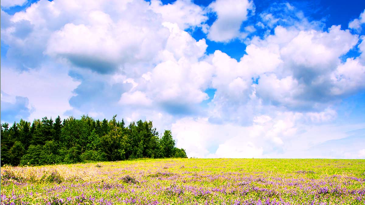 Landscape picture. Bright sky. Clouds. Trees. Flowers. Photo by Mekht on Unsplash